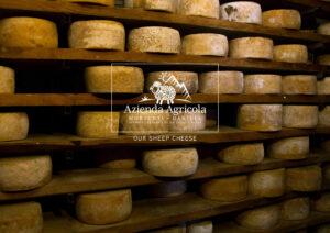 azienda-agricola-formaggi-di-pecora-sheep cheese